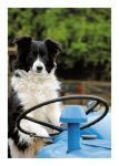 Birthday Card - Collie Dog - Country Cards