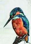 Birthday Card - Kingfisher Bird Quietly Observing - Country Cards