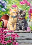 Birthday Card - Ginger Tabby Kitten Cat - Pair - Country Cards