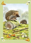 Birthday Card - Hedgehog Family - Country Cards