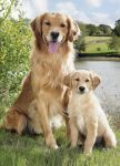 Birthday Card - Mother & Son Golden Retriever Dog - Country Cards