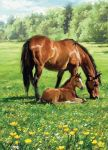 Greetings Card - Horse Mare & Foal Meadow - Country Cards