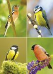 Greetings Card - Garden Birds - Country Cards