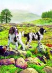 Birthday Card - Springer Spaniels Dog - Country Cards