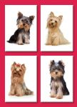 Birthday Card - Four Little Angels Yorkshire Terrier Dogs - Country Cards