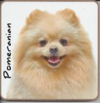 Pomeranian Dog Coaster - Dog Lovers