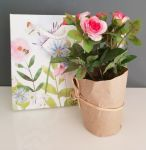 Pink Rose Flower in Pot - Free Gift Bag