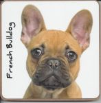 French Bulldog Dog Coaster - Dog Lovers