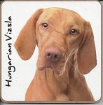 Hungarian Vizla Dog Coaster - Dog Lovers