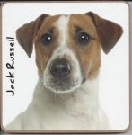 Jack Russell Dog or Puppy Coaster - Dog Lovers - 2 Designs