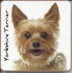Yorkshire Terrier Dog or Puppy Coaster - Dog Lovers - 2 Designs