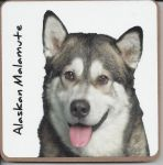 Alaskan Malamute Dog Coaster - Dog Lovers