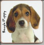 Beagle Dog or Puppy Coaster - Dog Lovers - 2 Designs
