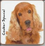 Cocker Spaniel Dog Coaster - Dog Lovers