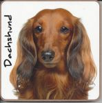 Dachshund Dog or Puppy Coaster - Dog Lovers - 2 Designs