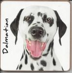 Dalmatian Dog Coaster - Dog Lovers