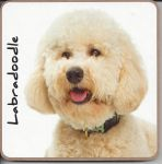 Labradoodle Dog Coaster - Dog Lovers