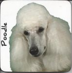 Poodle Dog Coaster - Dog Lovers