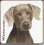 Weimaraner Dog Coaster - Dog Lovers