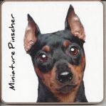 Miniature Pinscher Dog Coaster - Dog Lovers