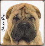 Shar Pei Dog Coaster - Dog Lovers
