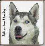 Siberian Husky Dog Coaster - Dog Lovers