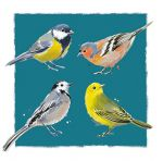 Note Card - 5 x Notelets - Garden Birds - Ling Design