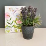 Lavender Plant in Pot Gift Set - Free Gift Bag
