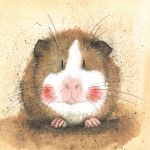 Greetings Card - Gilbert Guinea Pig - Alex Clark