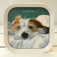 Scruffy Love Wire Hair Jack Russell Trinket Tray - The Little Dog