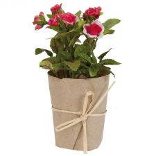 Pink Rose Flower in Pot