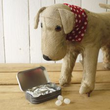 Scruffy Love Wire Hair Jack Russell Mint Tin Gift - The Little Dog