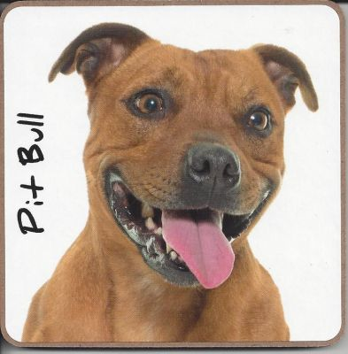 Pit Bull Dog Coaster - Dog Lovers