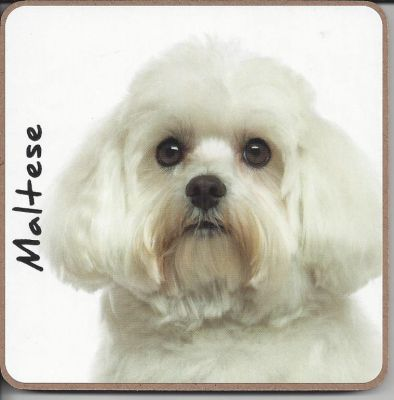 Maltese Dog or Puppy Coaster - Dog Lovers - 2 Designs