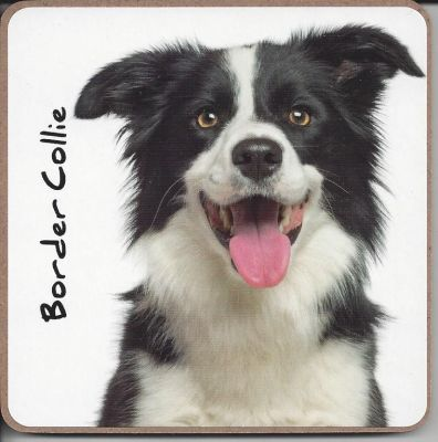 Border Collie Dog or Puppy Coaster - Dog Lovers - 2 Designs