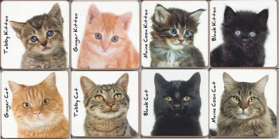 Cat Kitten Coaster - 8 Designs