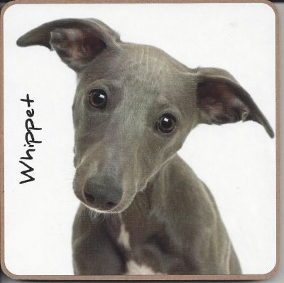 Whippet Dog Coaster - Dog Lovers