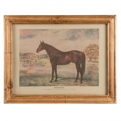 Horse Picture - Persimmon Racehorse - Print of Tapestry