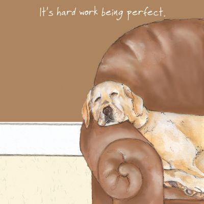 Greetings Card - Golden Labrador - Perfect - The Little Dog
